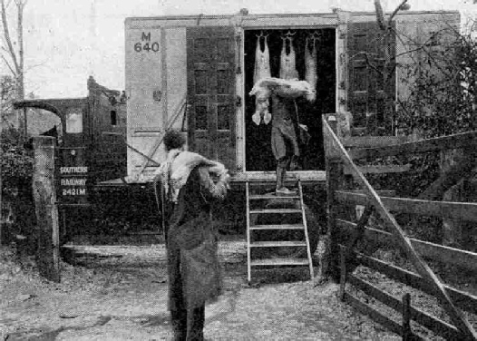 Loading meat into an SK insulated container at a West Country farm
