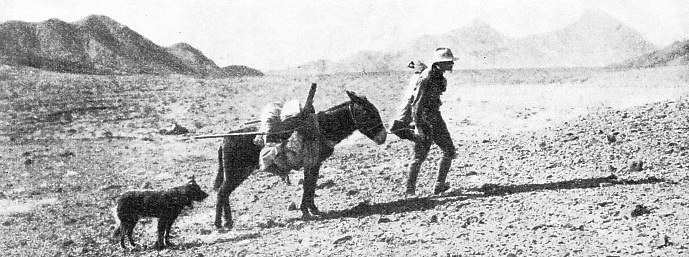 BEFORE THE RAILWAY CAME, a simpler mode of transport served the prospector in the desert